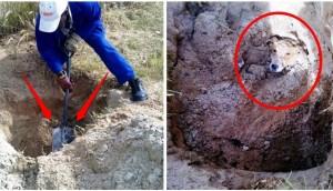 perrita-enterrada-viva