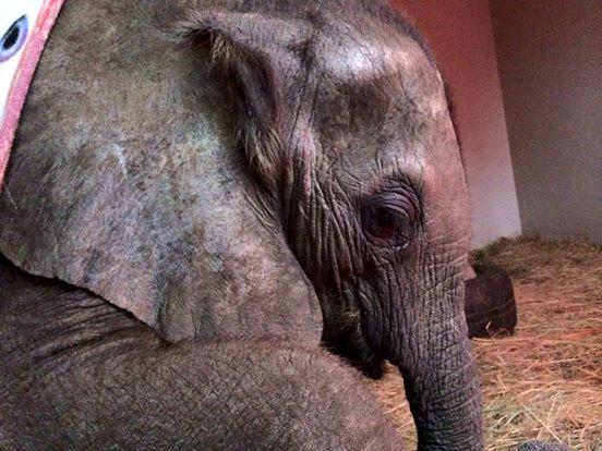 perro-ayuda-a-elefante-bebe1
