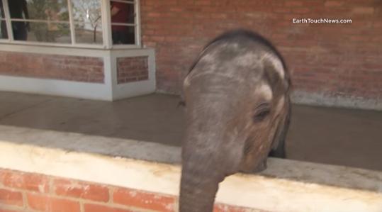 perro-ayuda-a-elefante-bebe3