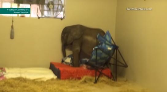 perro-ayuda-a-elefante-bebe6