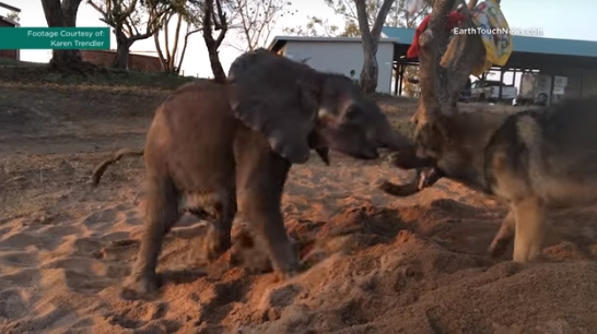 perro-ayuda-a-elefante-bebe7
