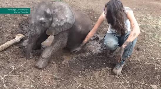 perro-ayuda-a-elefante-bebe8