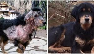 perro-sarna-rescatado