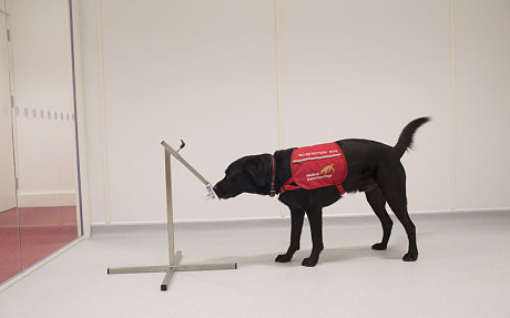 perros detectan cancer 4