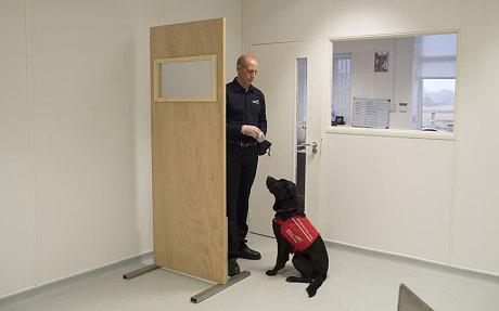 perros detectan cancer 5