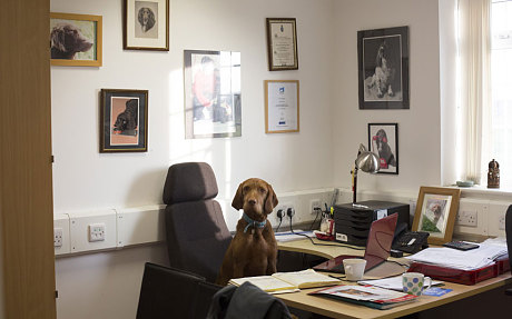 perros detectan cancer 7