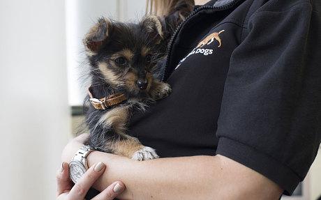 perros detectan cancer 9