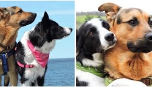 perros-mejores-amigos611 - copia