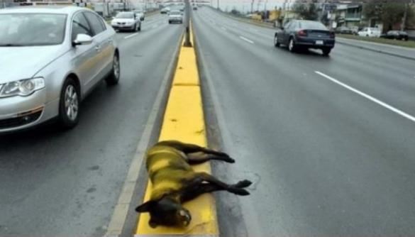 pintan-sobre-perro-fallecido-autopista1