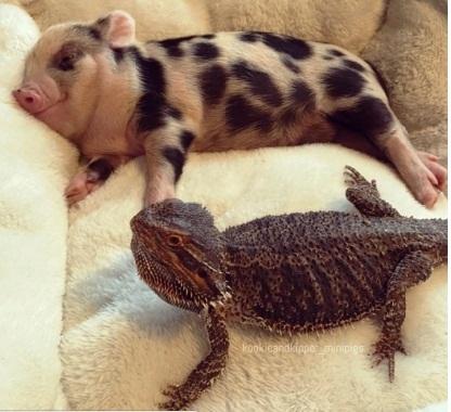 Cerdito y perrito 2