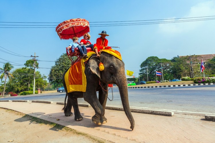 Elefante no montar 1