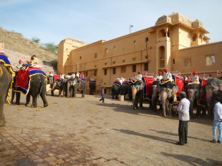 Elefante no montar 12