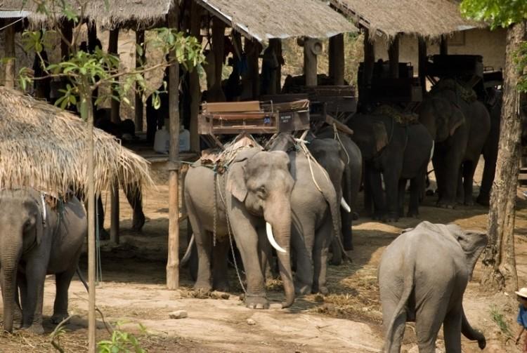 Elefante no montar 14