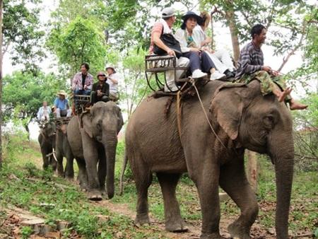Elefante no montar 15