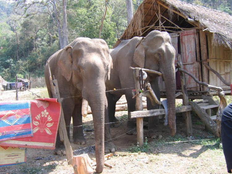 Elefante no montar 6