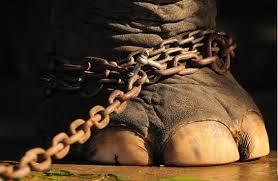Elefante no montar 9