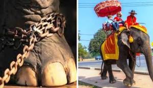 Elefante no montar portada