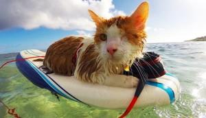 Gato surfing 1