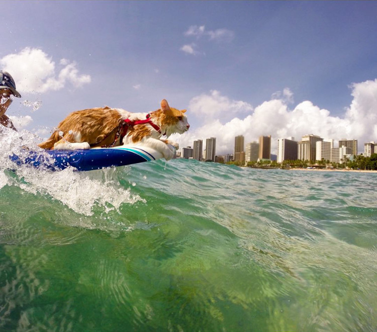 Gato surfing 4