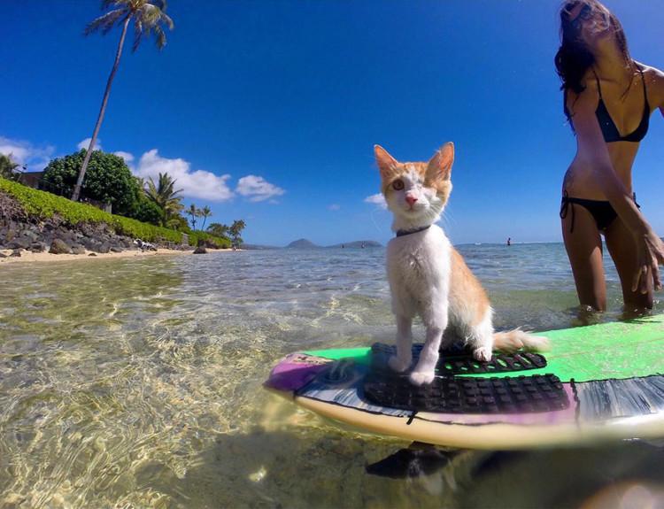 Gato surfing 5