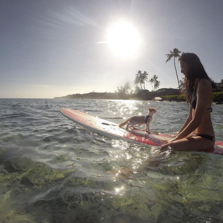 Gato surfing 6