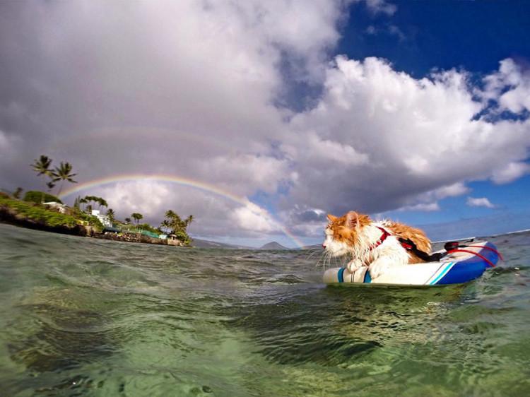 Gato surfing 9