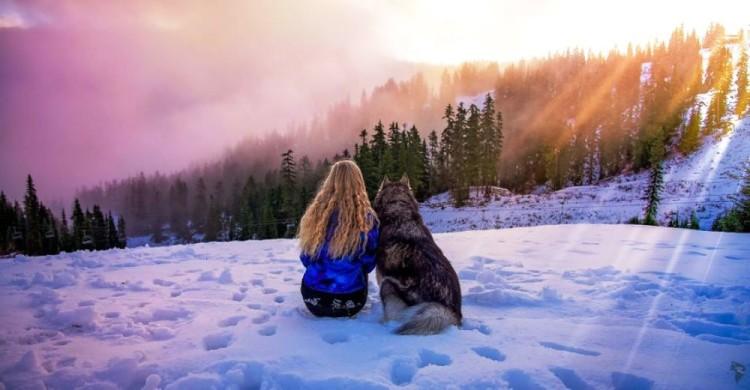 Husky rescatado 15