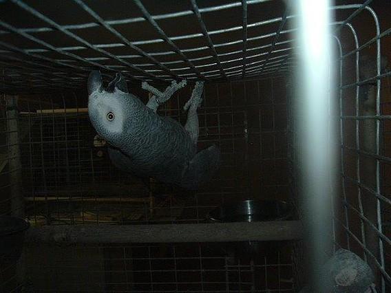 Las aves no deben estar en jaulas 12