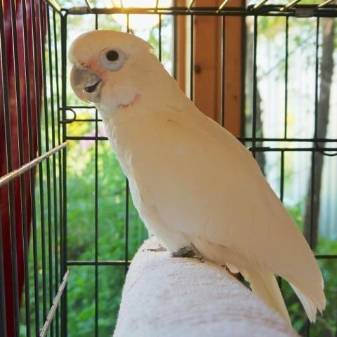 Las aves no deben estar en jaulas 13