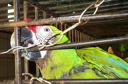 Las aves no deben estar en jaulas 16