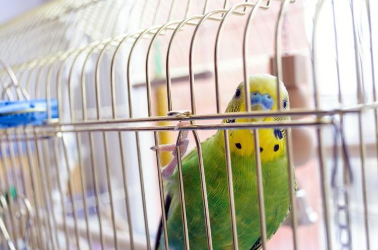Las aves no deben estar en jaulas 5