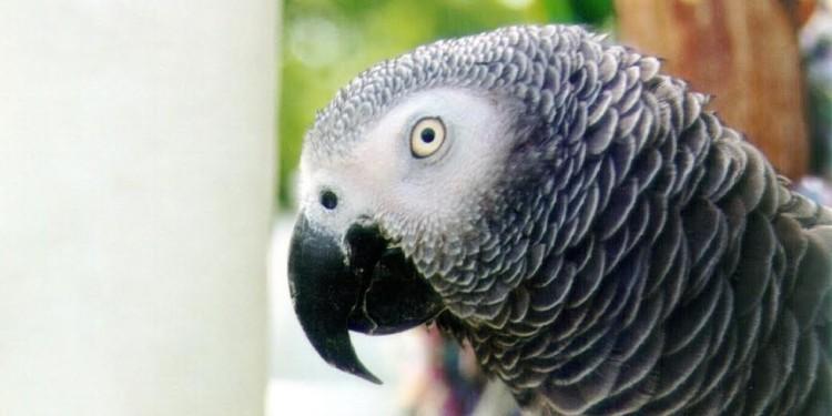 Las aves no deben estar en jaulas 6