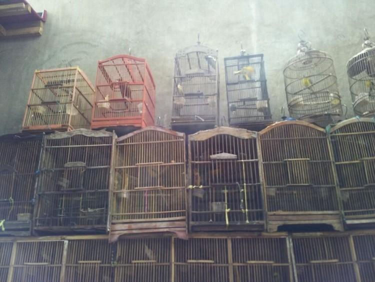 Las aves no deben estar en jaulas 8