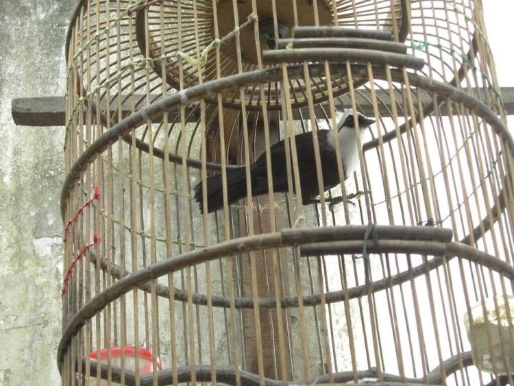 Las aves no deben estar en jaulas 9