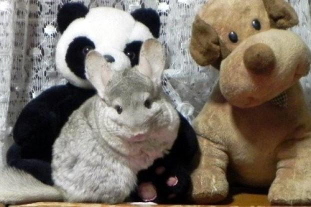 Mascotas con su peluche 3
