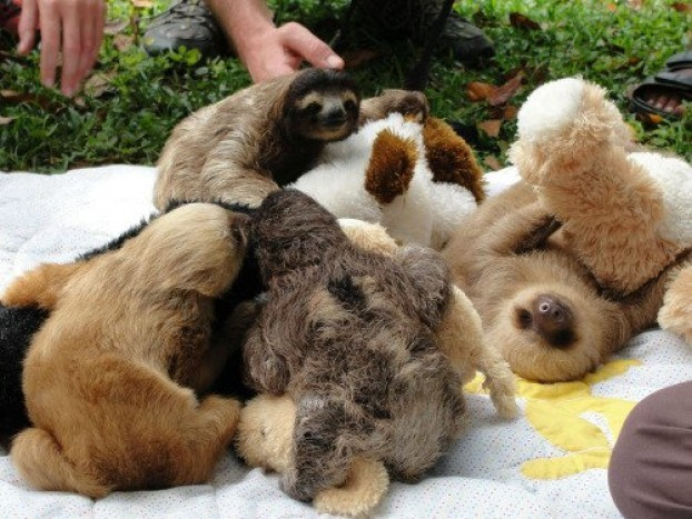 Mascotas con su peluche 5