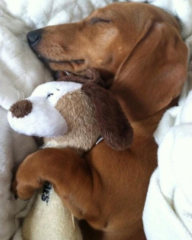 Mascotas con su peluche 8