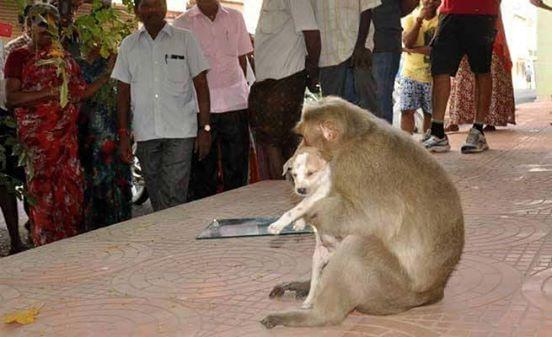 Mono Adopta Perrito 3
