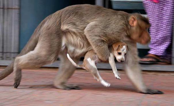 Mono Adopta Perrito 5