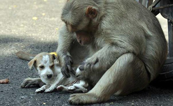 Mono Adopta Perrito 6
