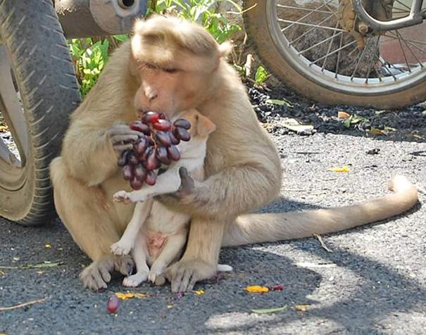 Mono Adopta Perrito 8