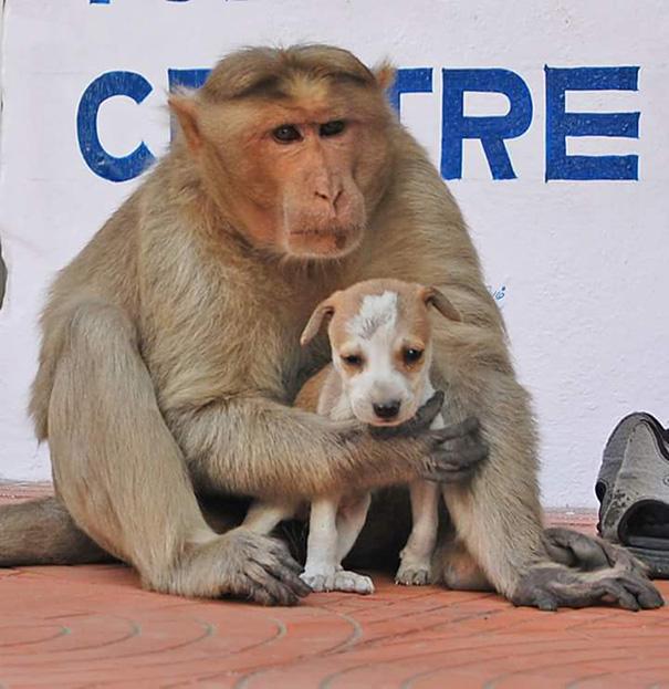 Mono Adopta Perrito 9
