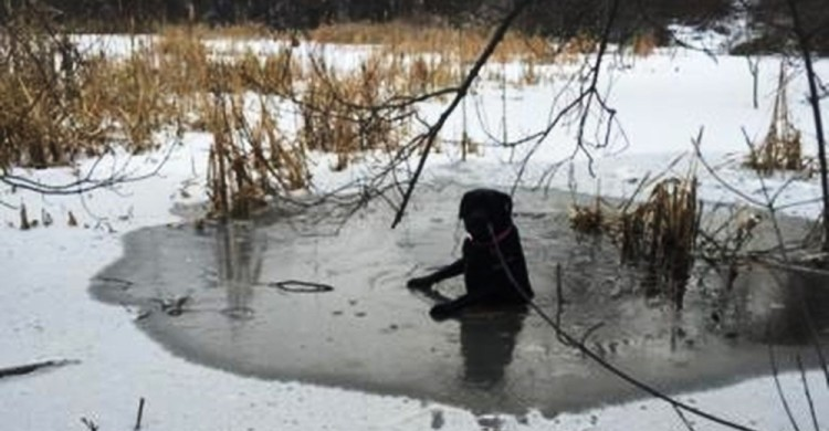 Perro sobre hielo pide ayuda 4