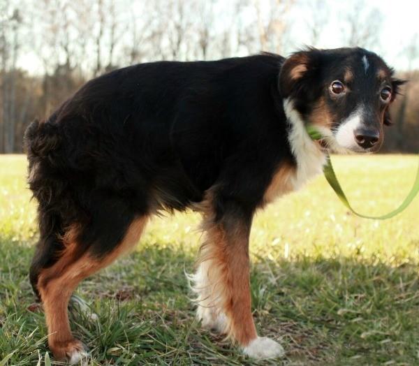 Perros sindrome de columna foto 2 en el refugio