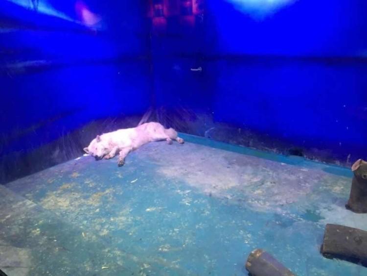 Zoologico de China 2