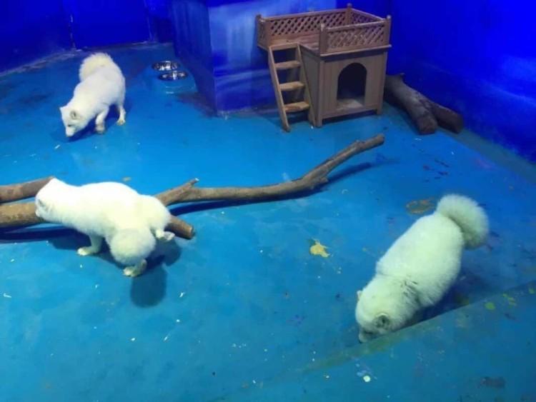 Zoologico de China 8