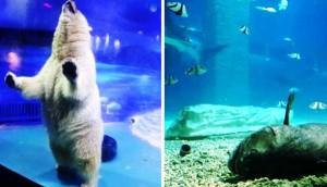 Zoologico de China portada