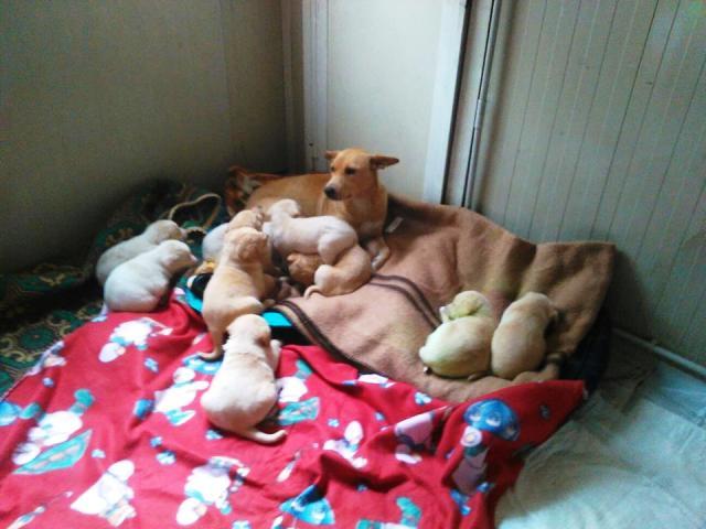 abandonan perra y cachorros 3