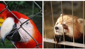 animales-encerrados-zoo-costa-rica