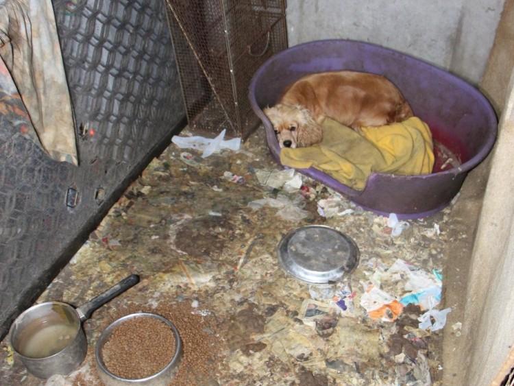 beagle esconde bebes 4